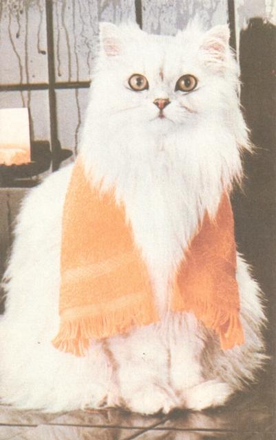 cat-1-rag-market