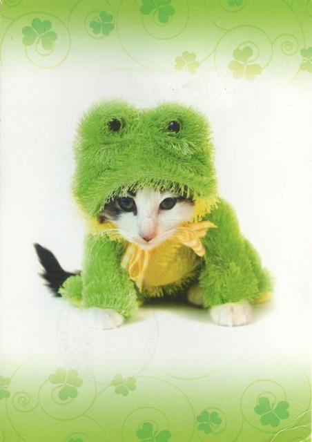 cat-frog