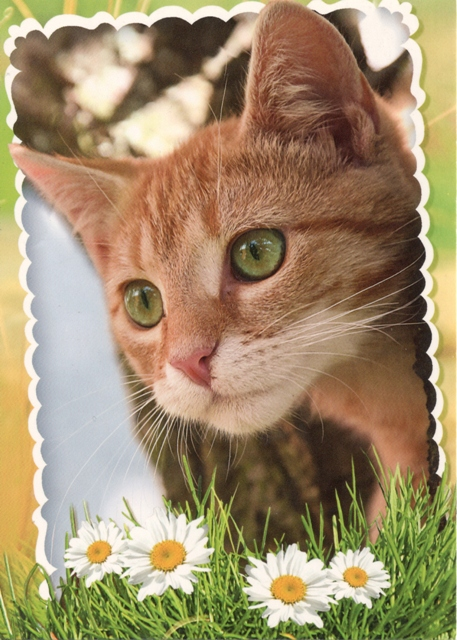 cat-surenka1