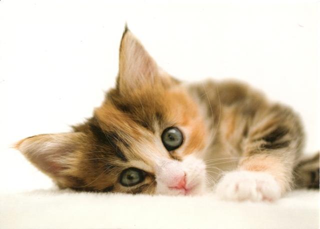 cat-surenka2