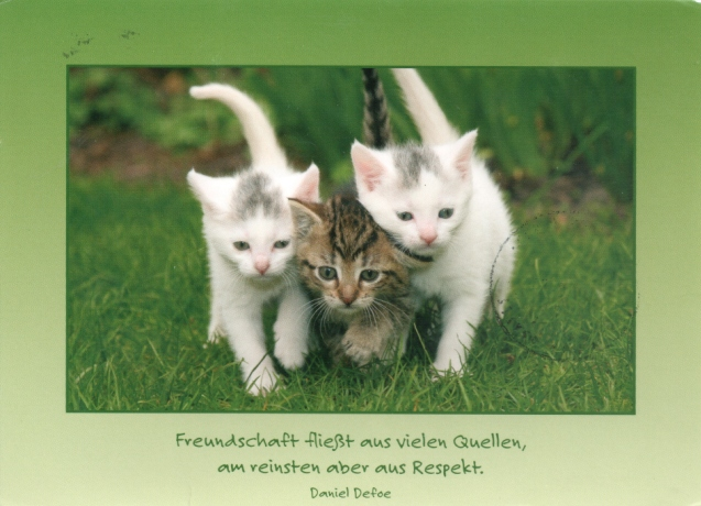 cat-tag-from-oobieneoo-germany