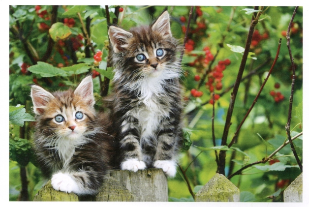 042, cats-from-germany