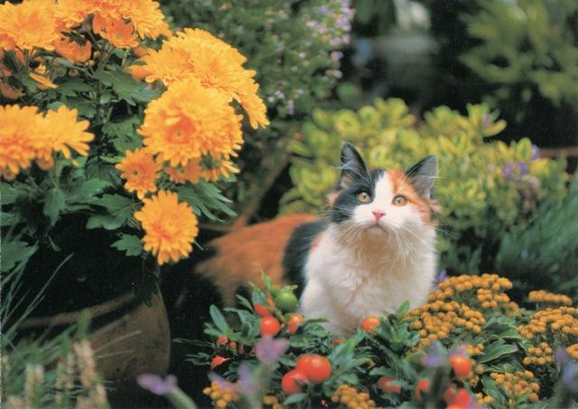 cats-rr-fl-21-2