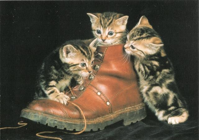 cats-rr-fl-21-3