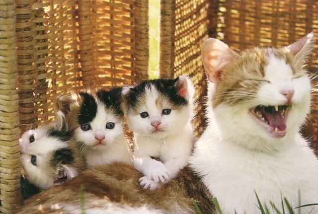 cats-rr-fl-21-6
