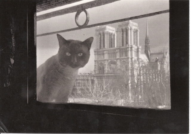 47 chat-notre-dame
