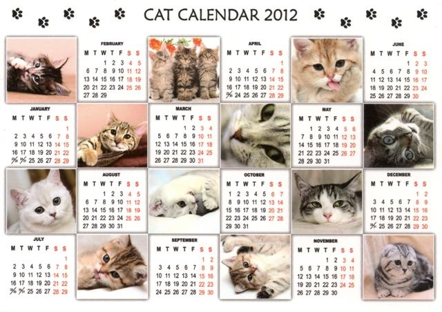 dasha-cats