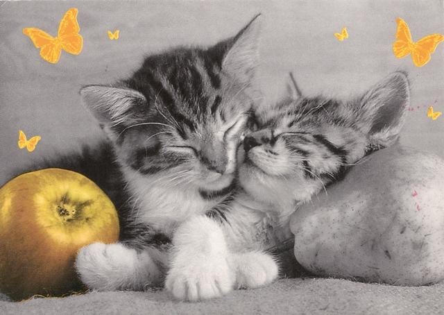 litv-cats_