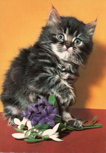 retro-kitten1