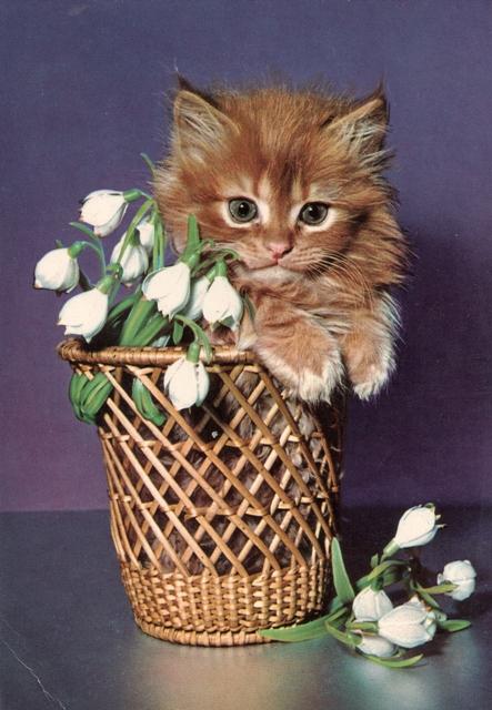 retro-kitten2
