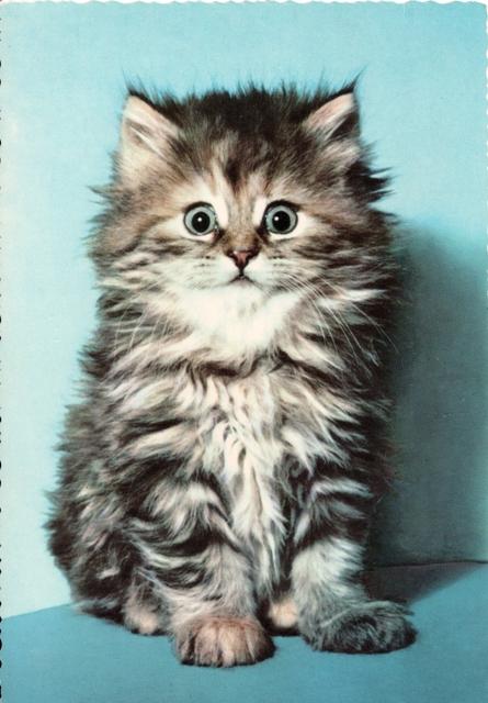 retro-kitten3