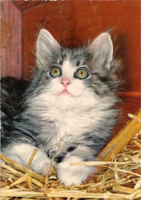 retro-kitten4