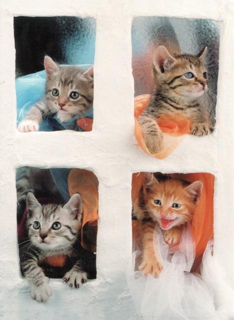swedish-cats