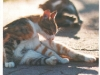 animals-rr-gr-449-3-from-nina-china