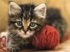 cat-anne82