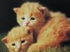 cat-card-2-from-yantar-russia-640x413