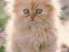 cat-from-tc