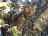 cat-tag-from-daniela-germany