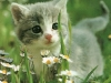 cat-tag-from-eleonora-italy