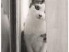 cat-tag-from-ida-hong-kong
