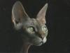 cat-tag-from-ksusha-ukr