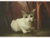 cat-tag-from-yanni-hong-kong