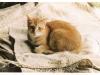 cat-tag-roxane-netherlands
