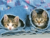 chatons-de-dan48