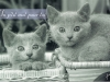 chatons-fr, Aline