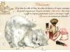 chats-enchantes-1