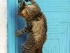 cat tag from Ibrilman