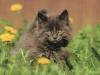 grey-kitten from Christine