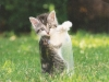 humorous-cat-tag-from-minam-usa
