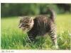 kitten-mindee