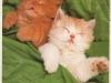 kittens-from-karen