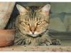 suspicious-cat