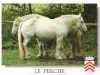 percheron de Stephane