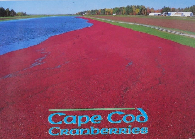 Cranberry bogs of Cape Cod, USA, a very special card and one of my favourites