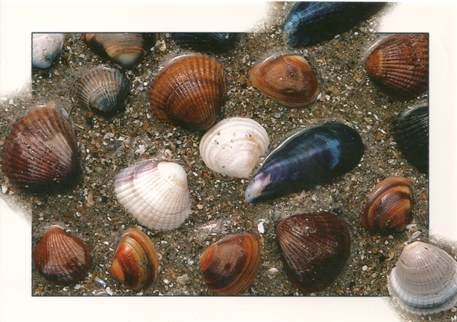 shells-holland