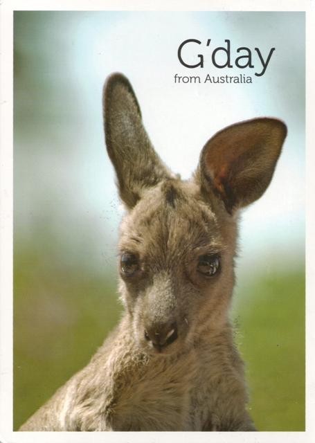 025, kangaroo-cub