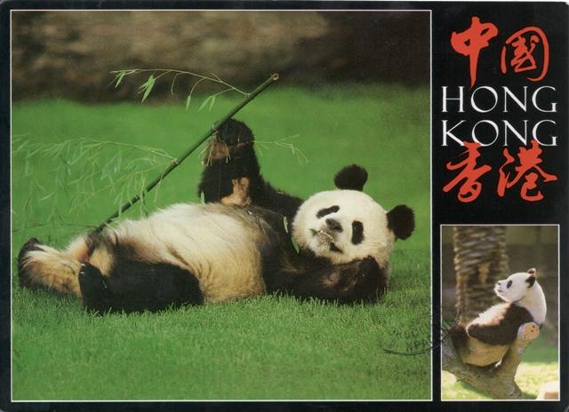 07, panda-from-iris