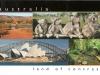 016 - cohalas from Australia