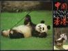 panda-from-iris