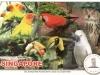 029, parrots