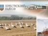 storks-belorussia
