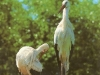 022, storks-from-taavi