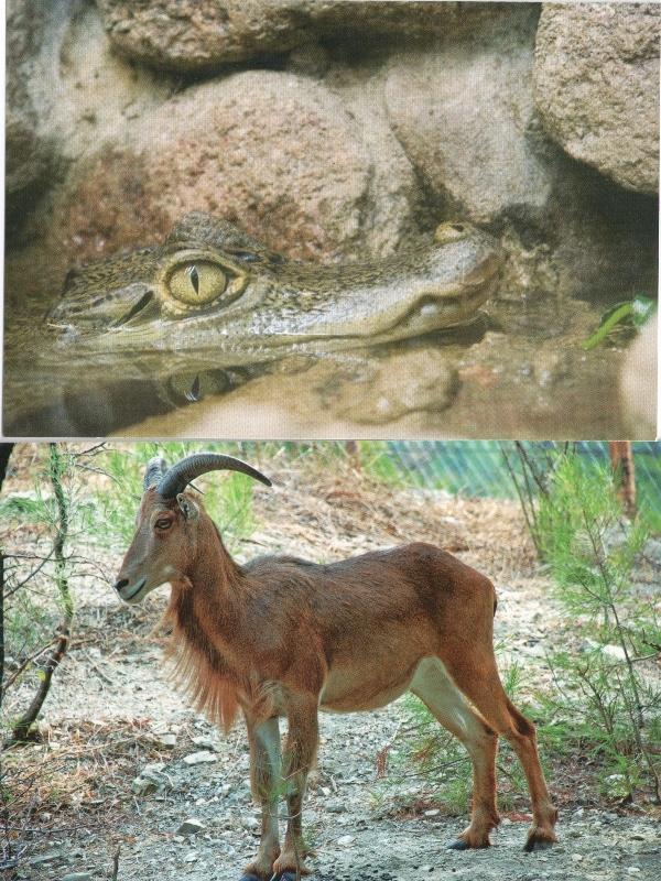 animals-for-sandra-21-22