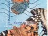 cuivre-des-marais