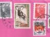 envelope-rose